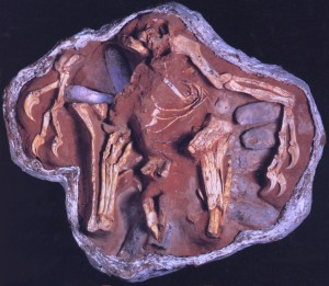 Fossil nest