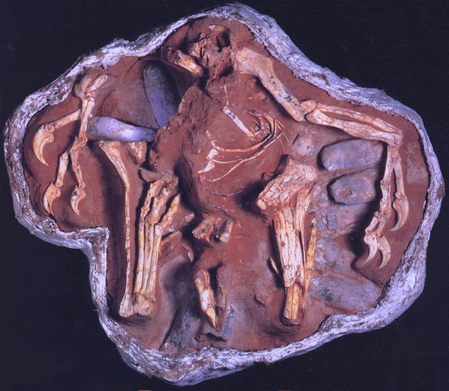 NestingOviraptorM.jpg
