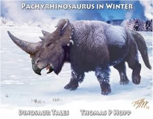 Pachyrhinosaurus In Winter