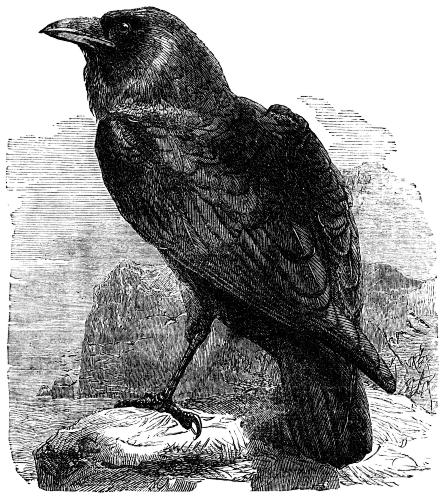 symbolism in the raven by edgar The literary devices edgar allan poe uses in the raven include imagery and symbolism, which he uses to portray the narrator's mood poe also incorporates a metaphor in the poem to create tension.