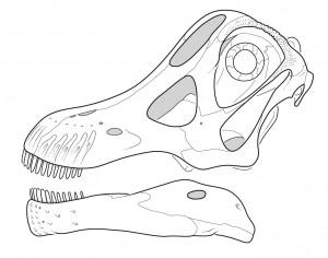 NemegtoSkull