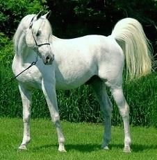 Beautiful Zahirah